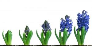 Retail sales growth spring 2012
